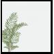 Vinilo translúcido plantas para cristales